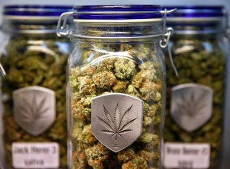 Il Colorado ha incassato così tanti soldi in marijuana, che darà indietro le tasse ai cittadini