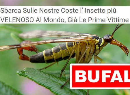 BUFALA ALLARMISTA SBARCA SULLE NOSTRE COSTE L'INSETTO PIÙ VELENOSO AL MONDO, GIÀ LE PRIME VITTIME