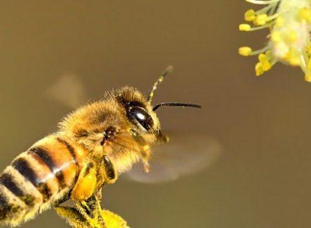 I pesticidi che uccidono le api non arrivano solo dall'agricoltura!