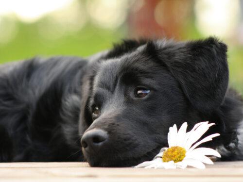 Cani abbandonati: attenzione alla bufala del numero di emergenza
