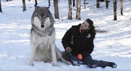 Un lupo gigante si siede accanto alla ragazza – guardate che cosa succede quando lei si gira