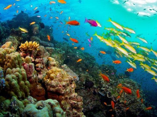 La Grande Barriera Corallina Australiana è stata ufficialmente dichiarata Morta